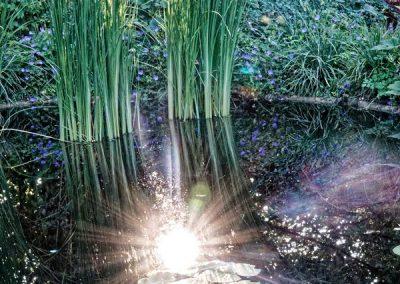 Reflet au jardin